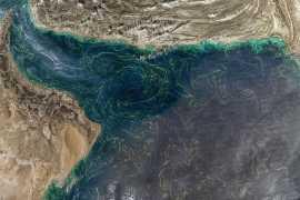 Обнаружены причины расширения мертвой зоны Аравийского моря