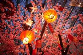 阿联酋与您共度中国春节